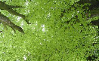 Tree canopy from beneath